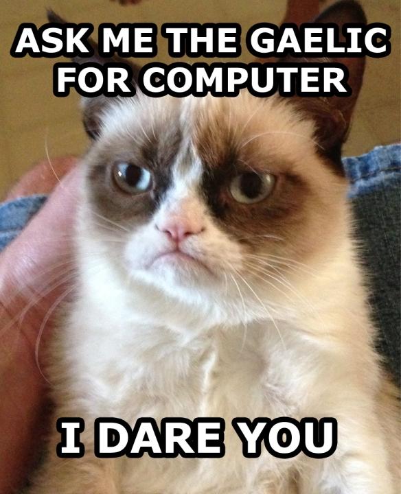 Grumpy cat learns Gaelic